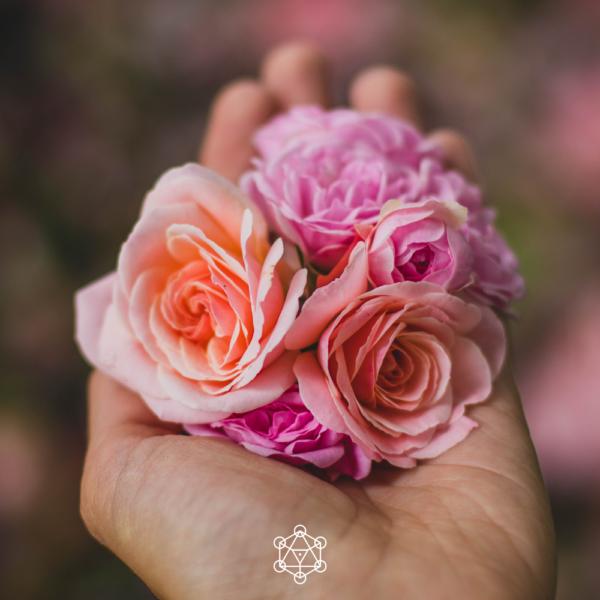 Tenir dans sa main des fleurs, des roses. Prendre soin de son féminin avec tendresse.